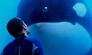 Blackfish - trainer, diver