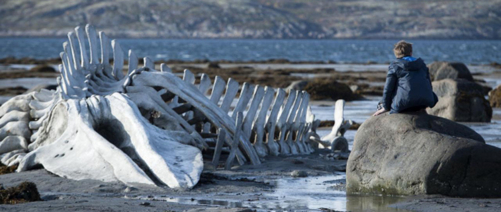Leviathan - whale skeleton