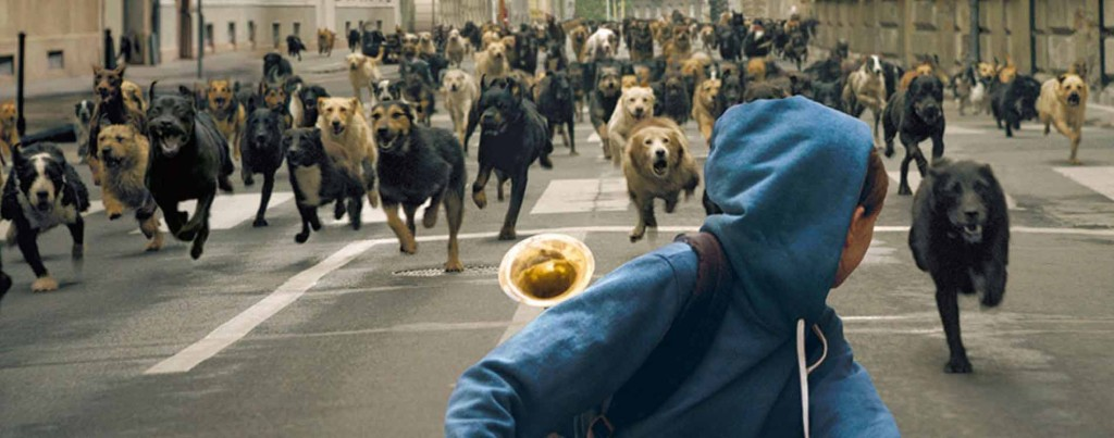 White-God---Zsofia-Psotta,-dogs-chasing